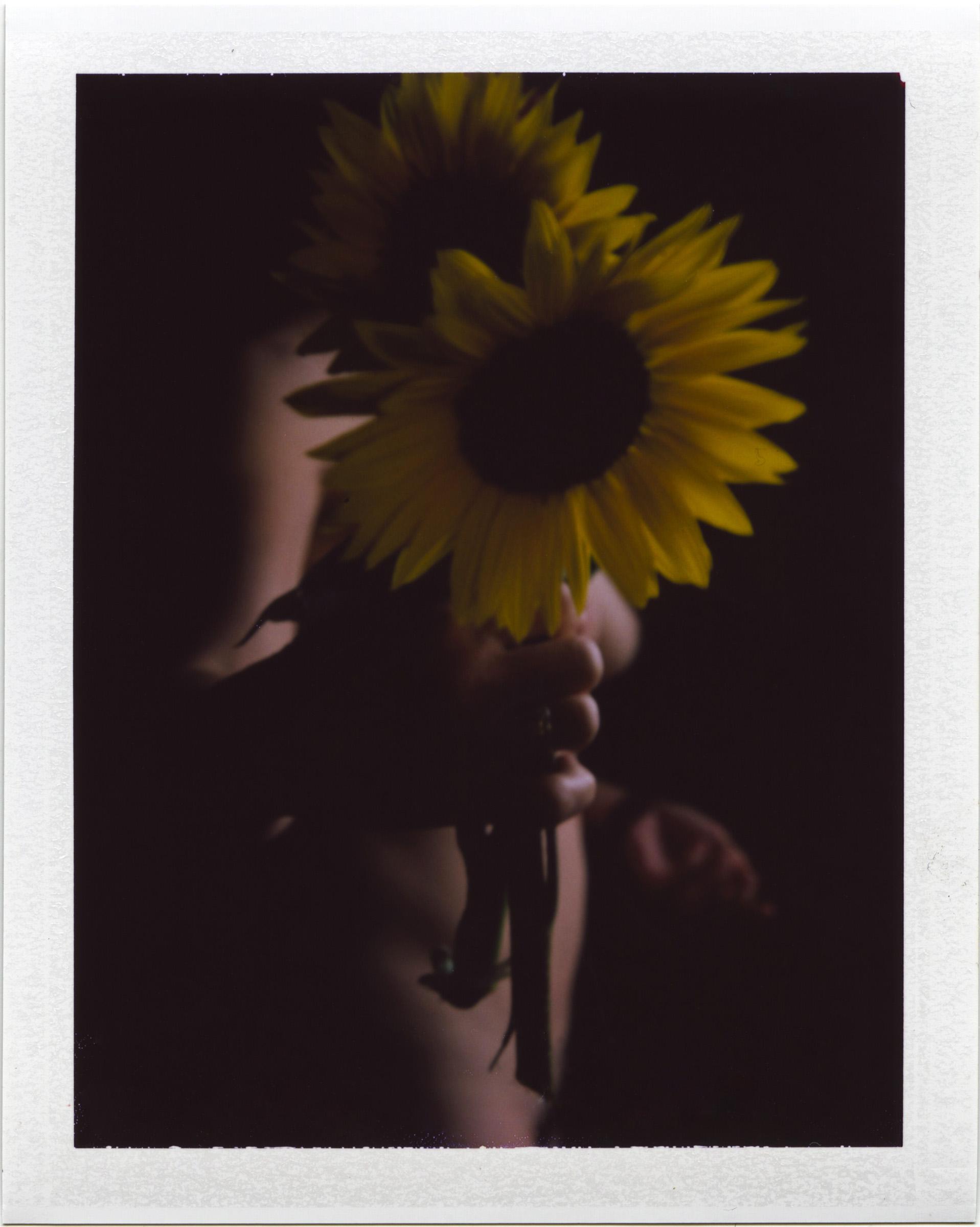 July12_pola_mornsunflower