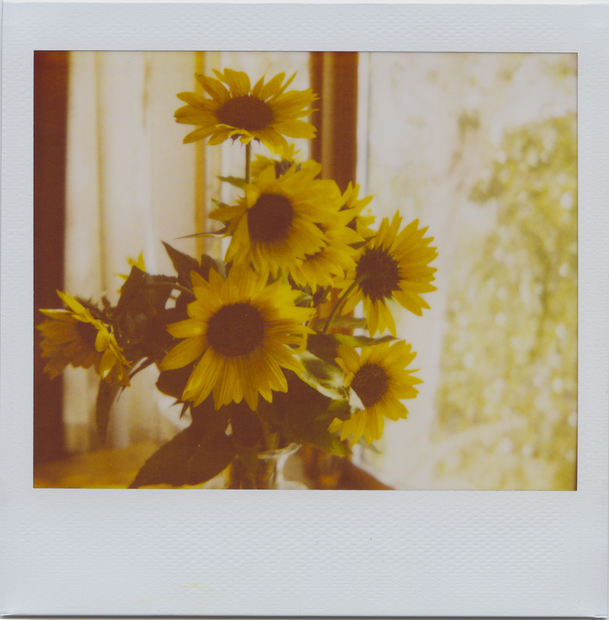 July12_spectra_moresunflowers