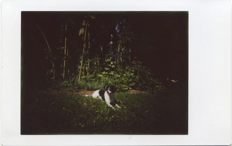 Aug16_lomo_Avery