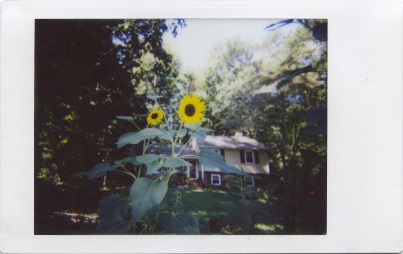 Aug16_lomo_sunnyhouse