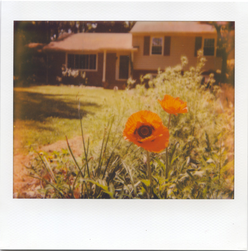 May18_spectra_poppies