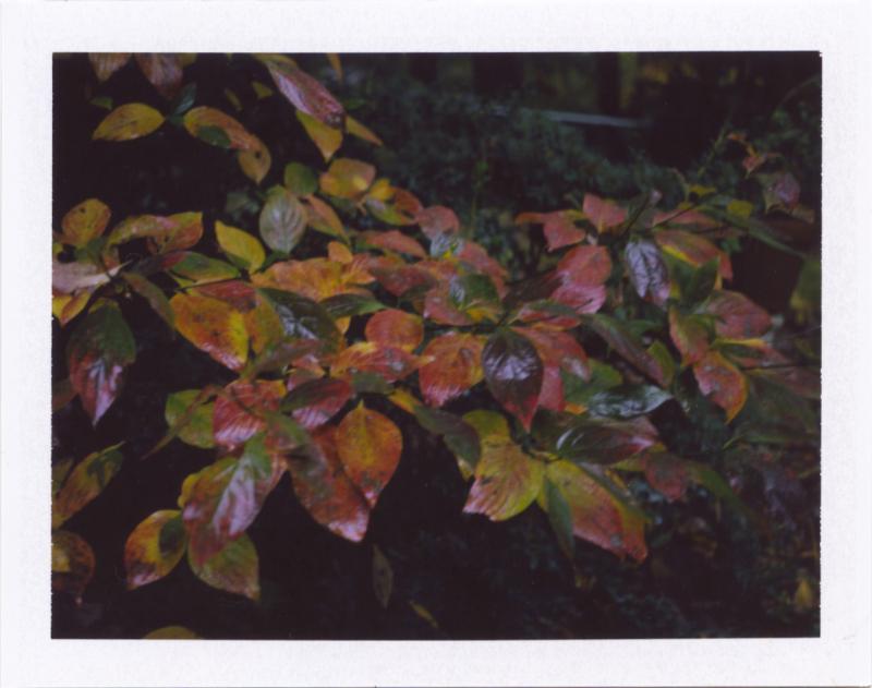 Nov18_pola_autmorn1