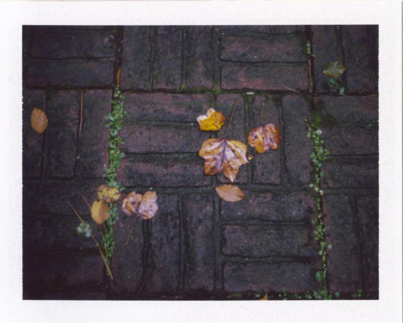Nov18_pola_autmorn3