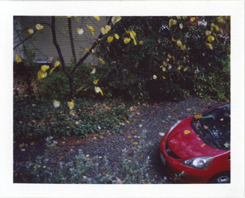 Nov18_pola_autmorn2