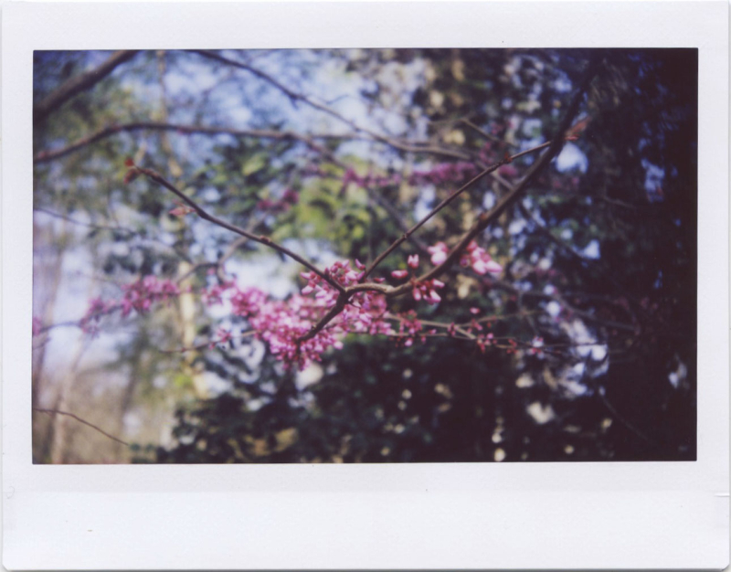 Apr19_instax_spring1