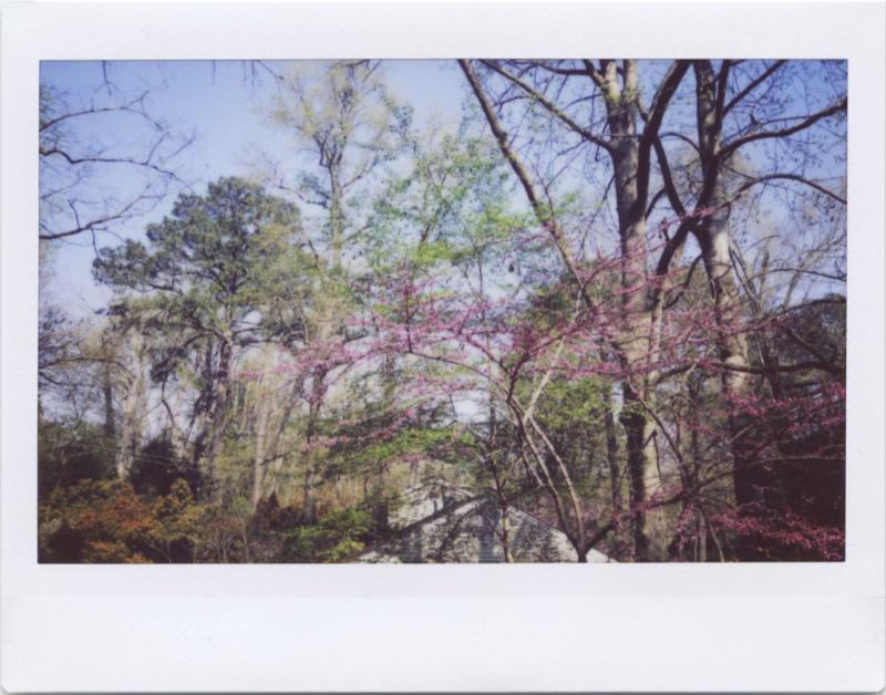 Apr19_instax_spring2