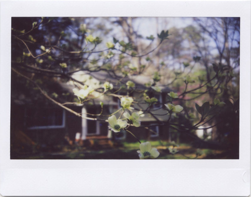 Apr19_instax_spring4