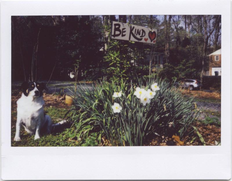 Apr19_instax_spring6