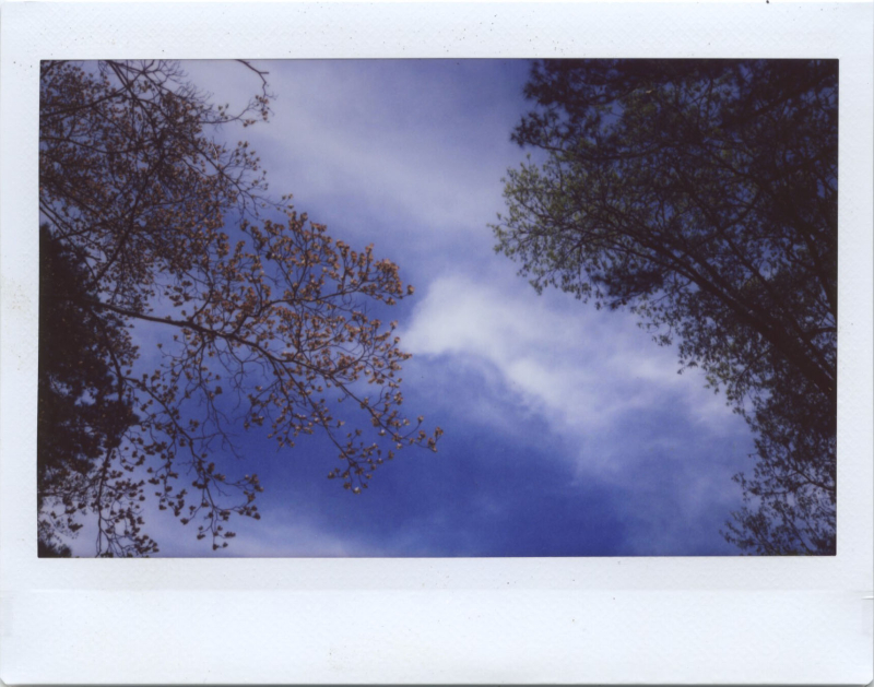 Apr19_instax_dogwoodoak1