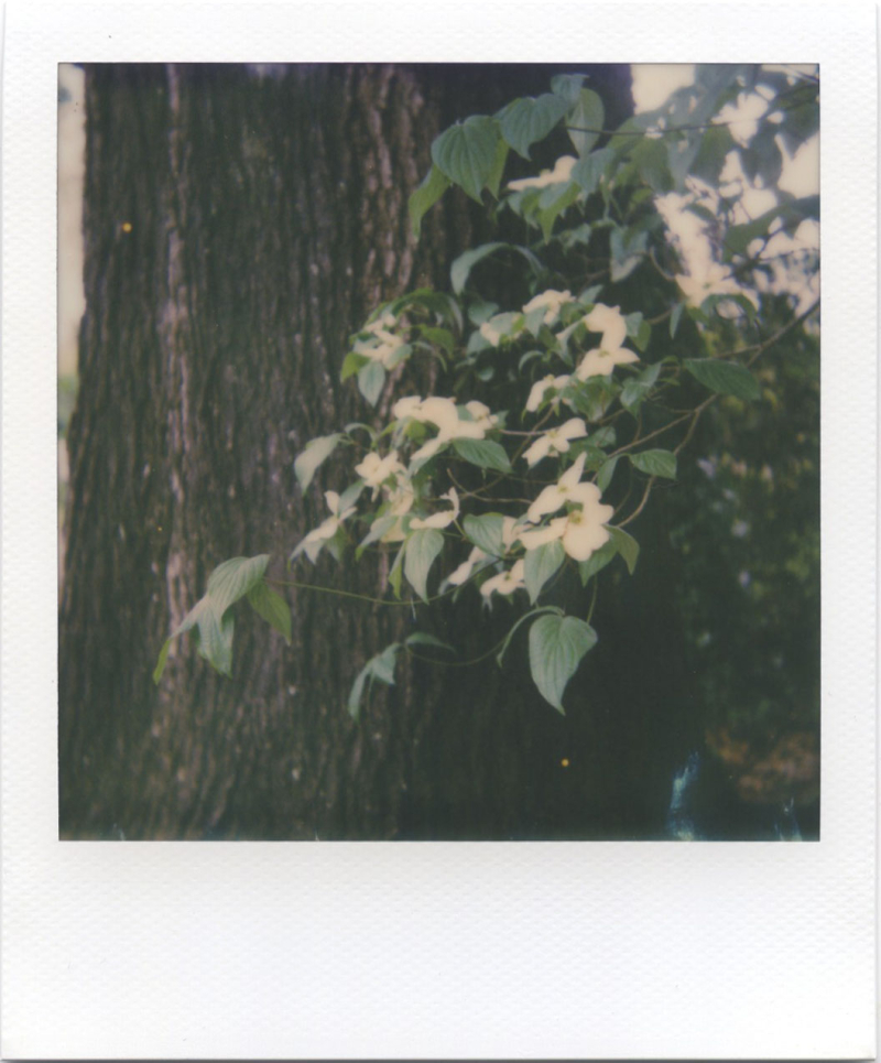 Apr19_polaroid_6003