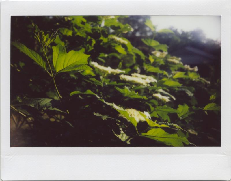 May19_instax_garden3