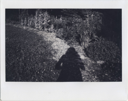 May19_Instax_bwgarden