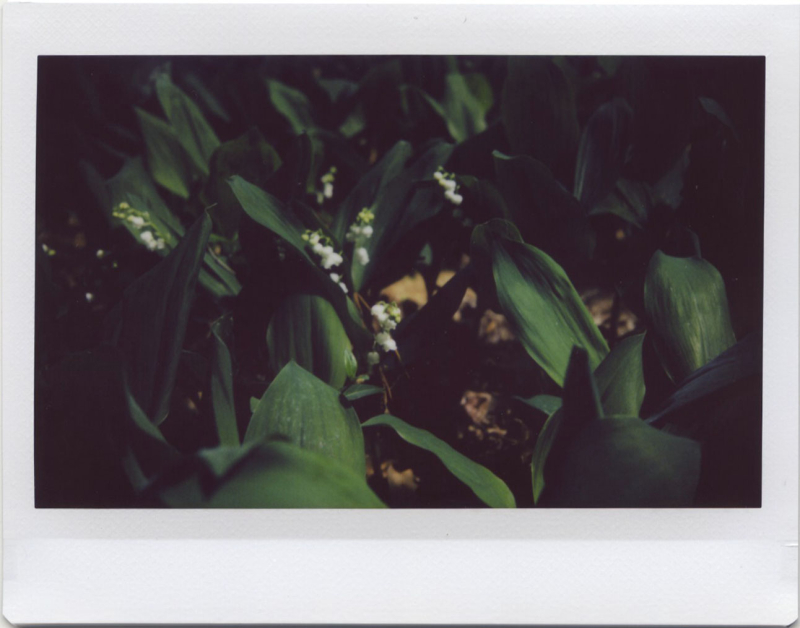 Apr19_instax_roidweek1