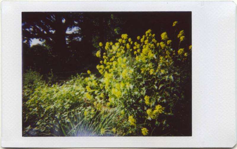 May19_IM_garden1