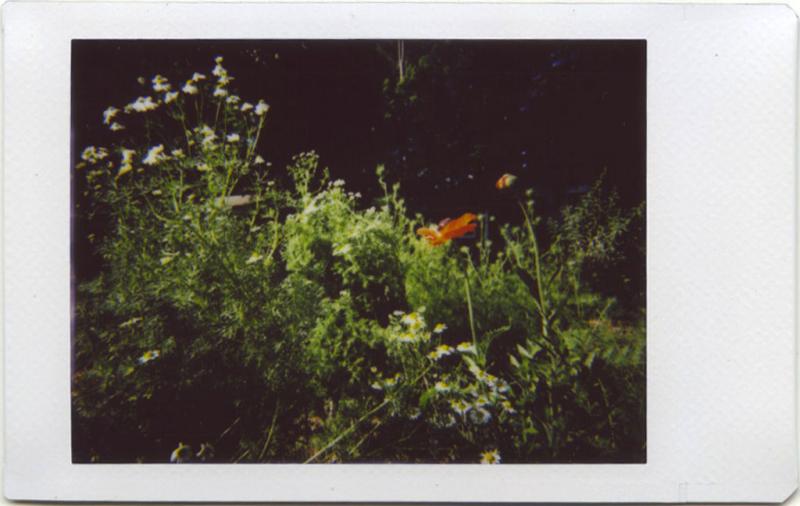 May19_IM_garden2
