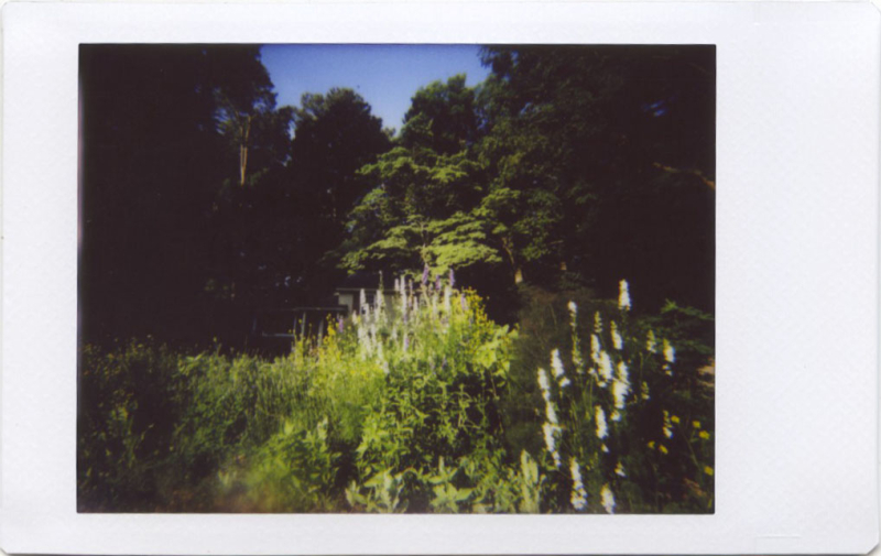 May19_IM_garden