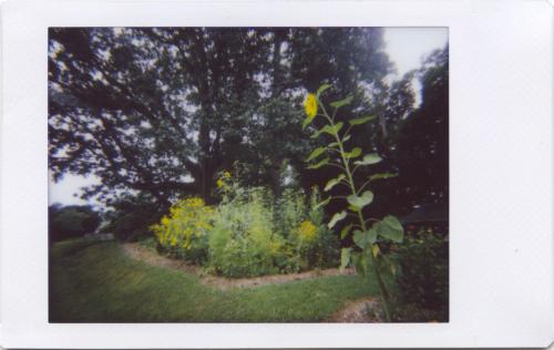 July19_IM_garden