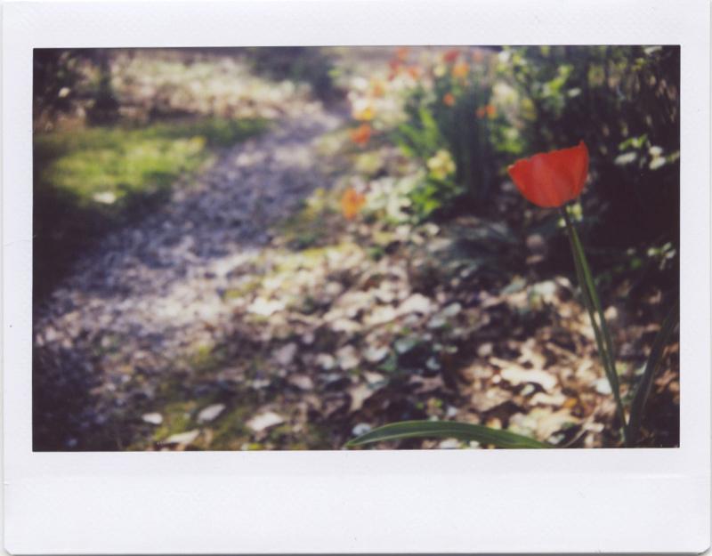 Apr19_instax_spring3