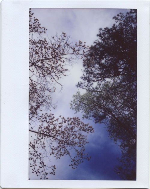 Apr19_instax_dogwoodoak