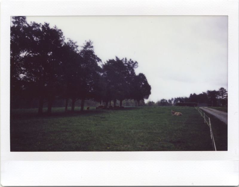 Apr19_instax_fgf1