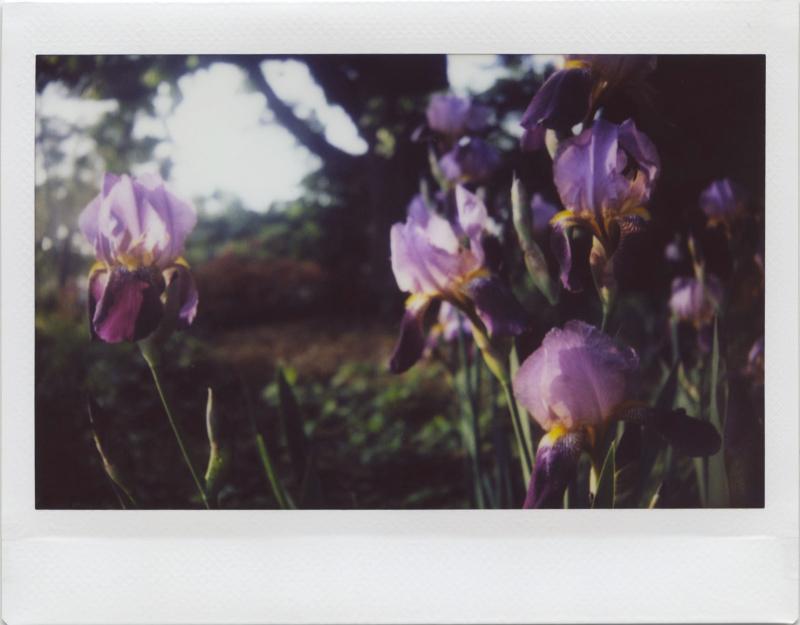 May19_instax_garden4