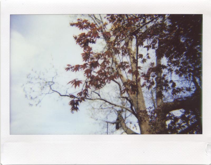 Mar20_lomo_sunspring1