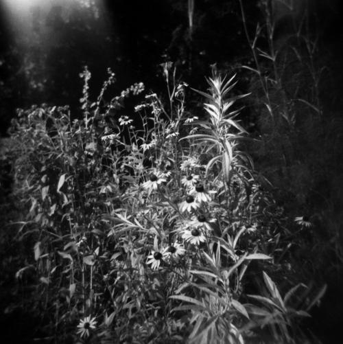 Jun20_holga_garden3
