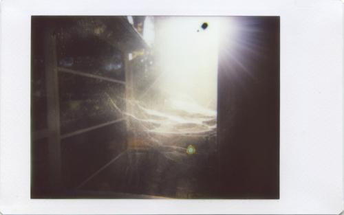 Nov20_IM_chasingautumn5