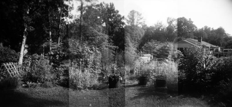 Jun20_holga_garden1