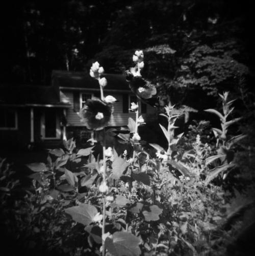 Jun20_holga_garden4