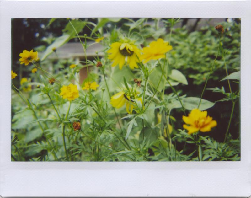 Jul20_lomo_thursgar2