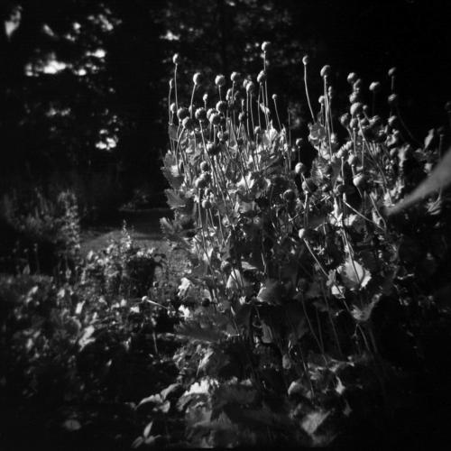 Jun20_holga_garden7