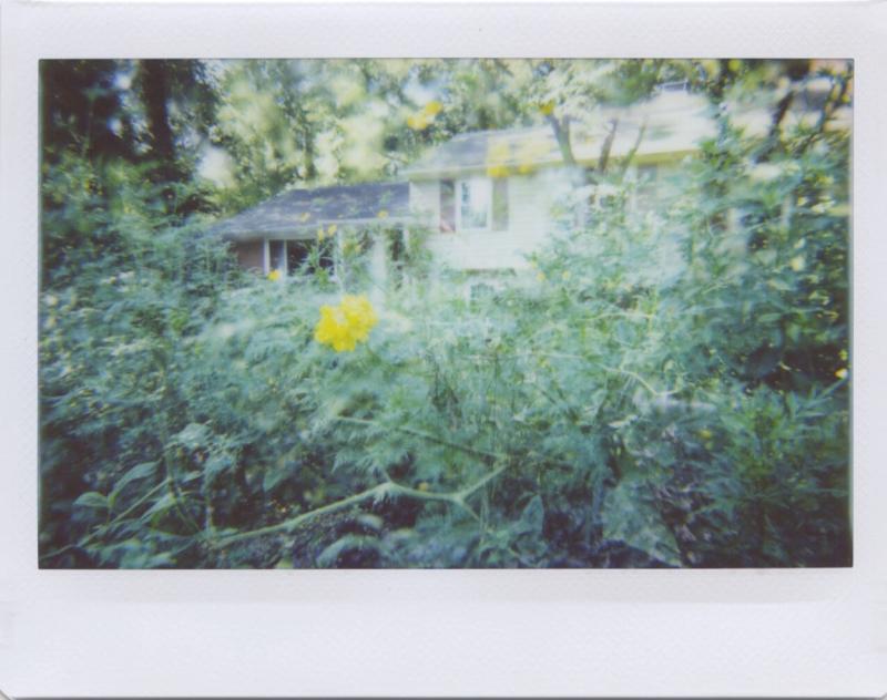 Aug20_lomo_jungle2.jpg