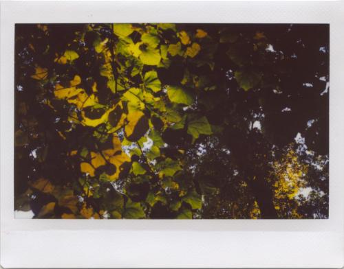 Oct20_instax_RW7_2
