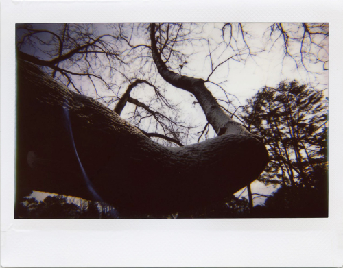 Jan21_lomo_cold002
