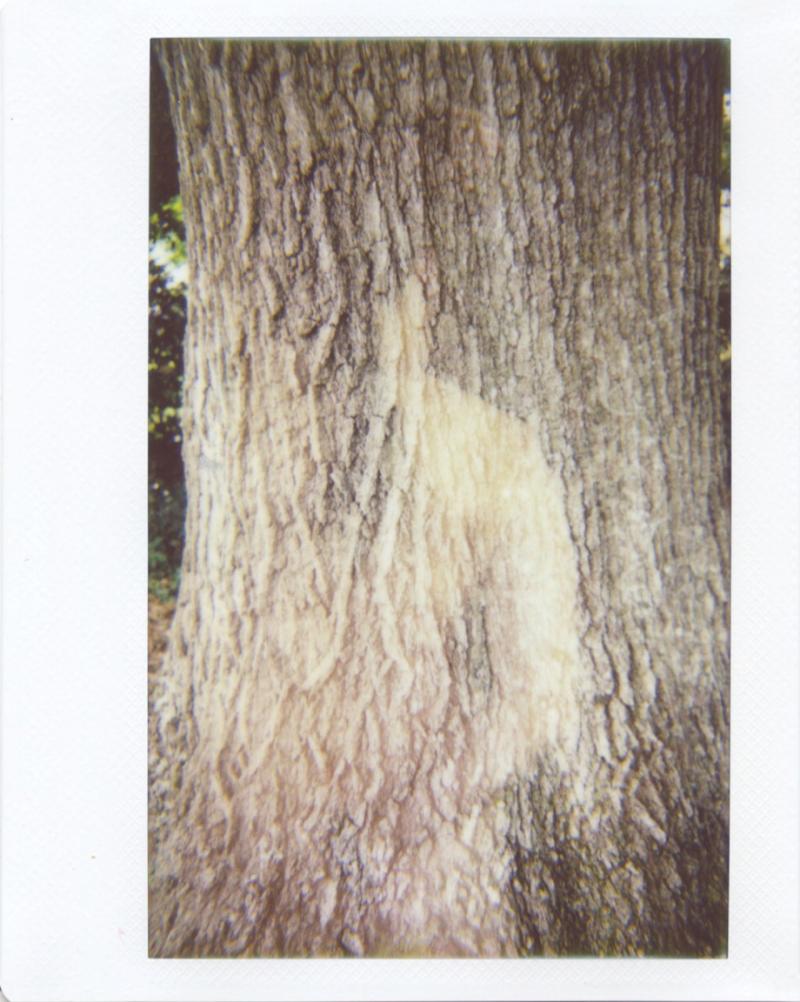 Sep20_lomo_treespirit.jpg