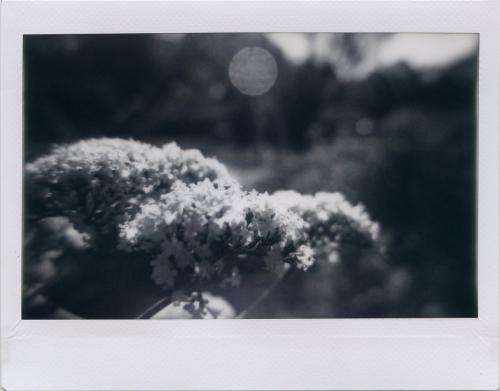 May21_lomo_summer002