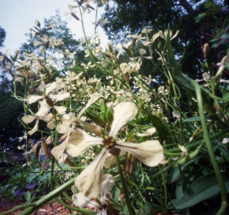 June21_zeroc_garden004